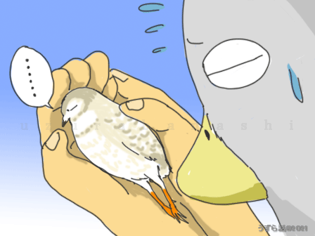 卵塞の時のとくちゃん
