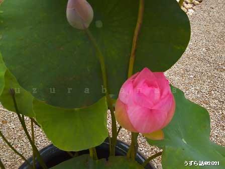 f:id:uzurabanashi:20210710172043j:plain