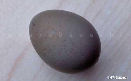 ヒメウズラの卵