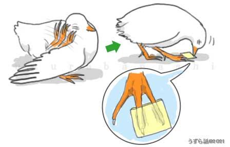 鳥に顔を掻かせない対策