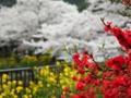 『京都新聞写真コンテスト 赤白黄色の協演』