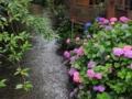 『京都新聞写真コンテスト 高瀬川の梅雨を彩る』
