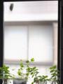 『京都新聞写真コンテスト 我が家にも夏がやって来た』