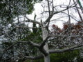 クリスタルの街路樹