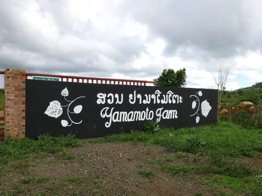 パクソン(Paksong)のヤマモトファーム