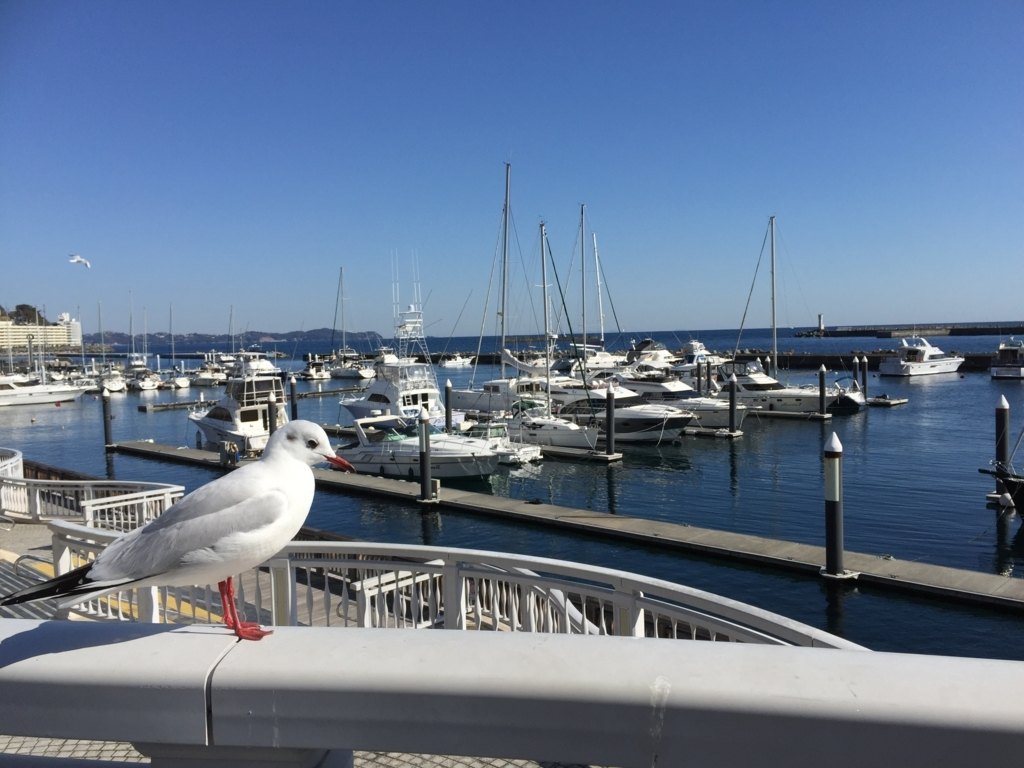 熱海の港に佇む鳥