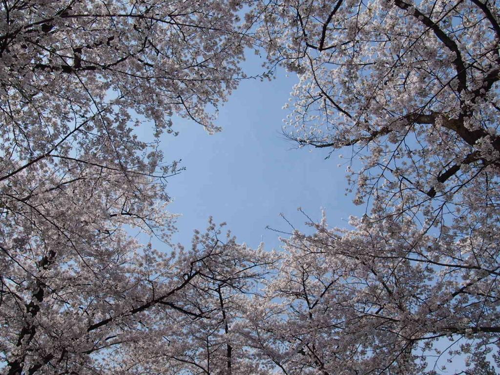 群馬県赤城南面千本桜の写真