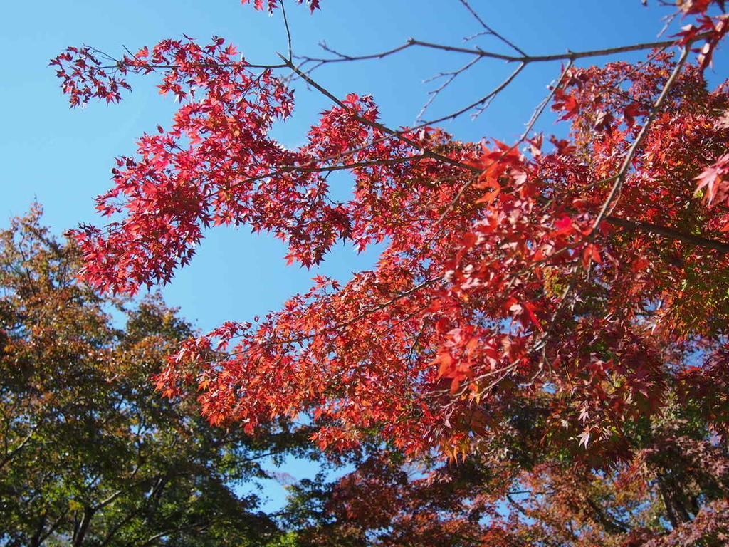 東京都高尾山の紅葉