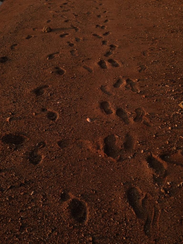 ニューカレドニアヌメアのビーチにあった足跡
