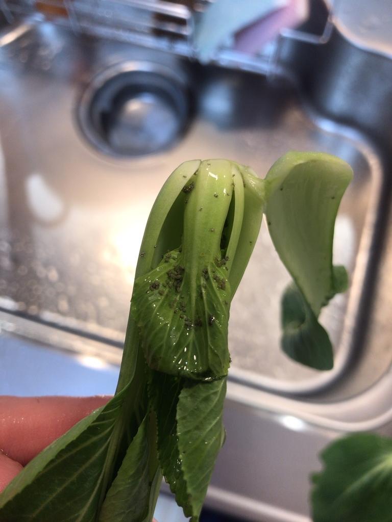 f:id:vegetable-garden:20190203204915j:plain