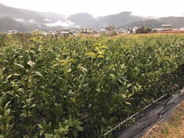 f:id:vegetable-garden:20190211134355j:plain