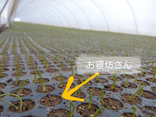 f:id:vegetablist:20200303172315j:image