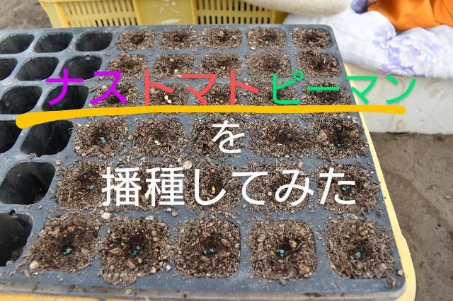 f:id:vegetablist:20200410124358j:image