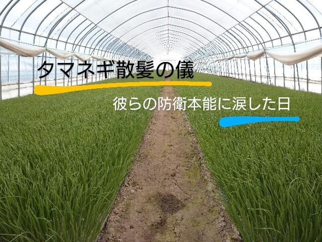 f:id:vegetablist:20200410170424j:image