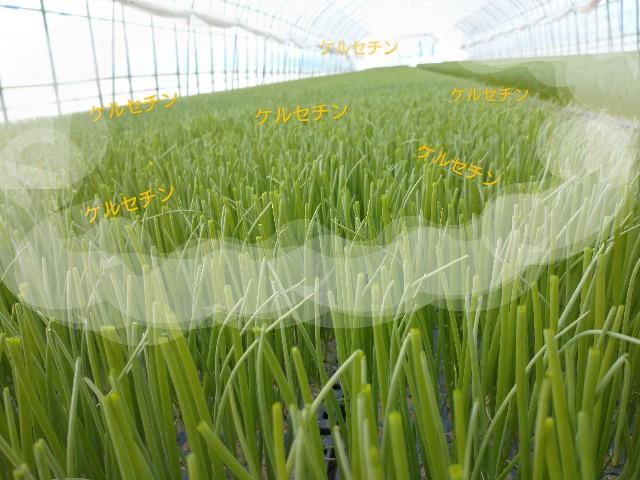 f:id:vegetablist:20200410181014j:image