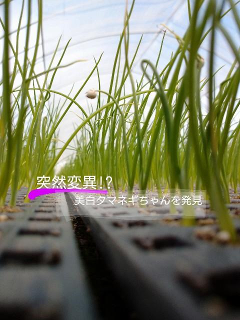 f:id:vegetablist:20200411225155j:image
