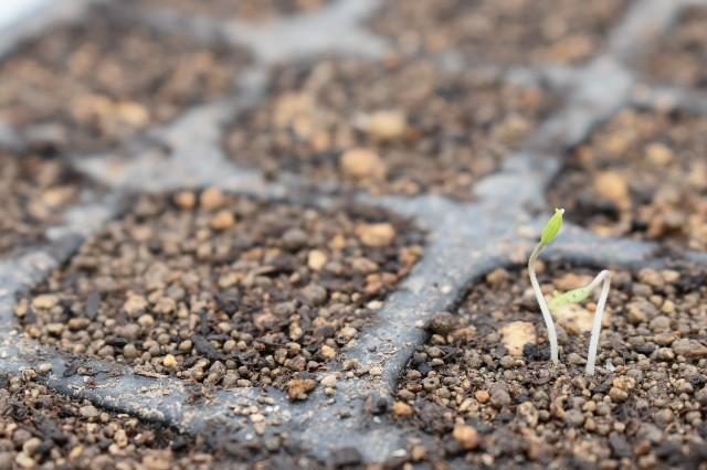 f:id:vegetablist:20200414133639j:image