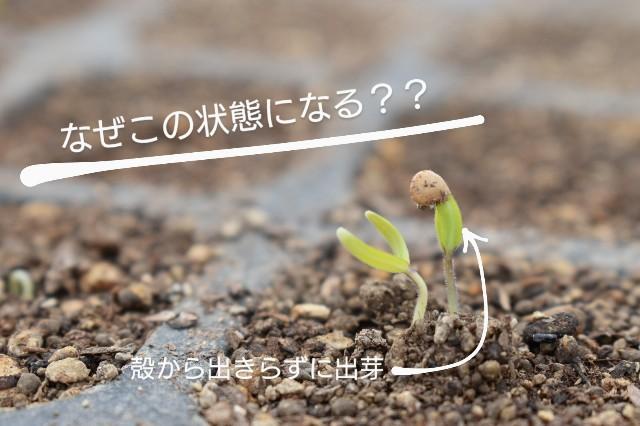 f:id:vegetablist:20200416220725j:image