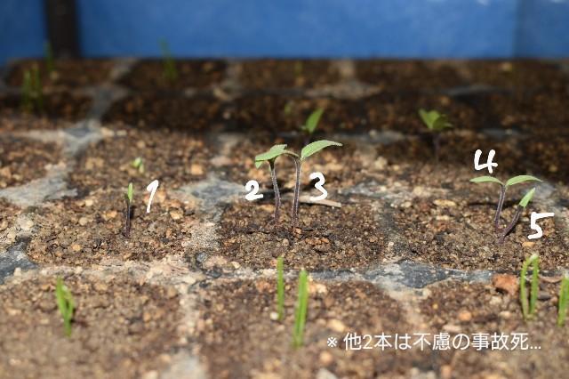 f:id:vegetablist:20200417175643j:image