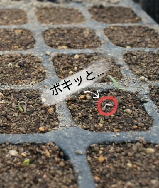 f:id:vegetablist:20200417184032j:image