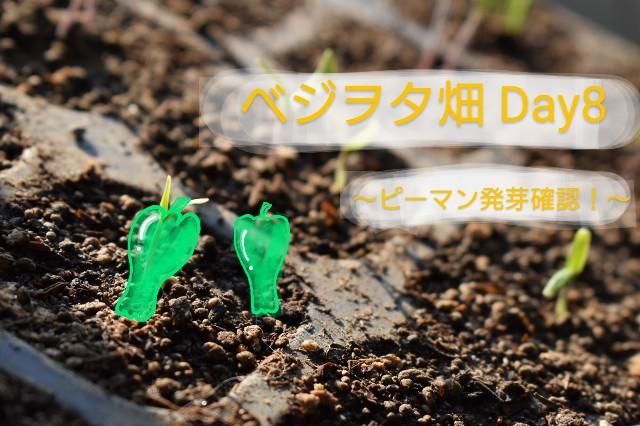 f:id:vegetablist:20200419061310j:image
