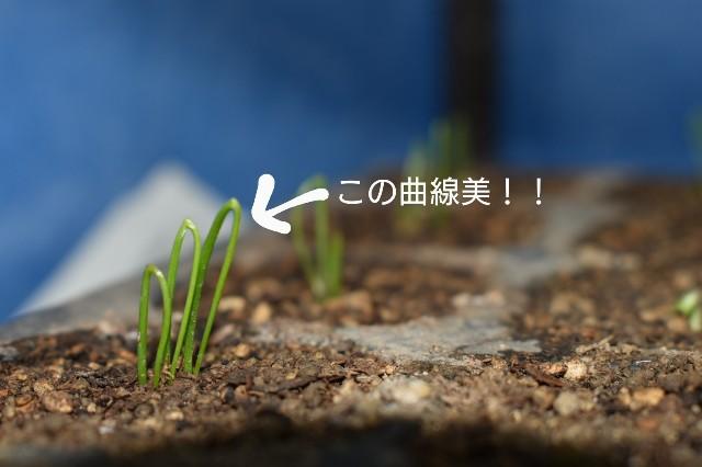 f:id:vegetablist:20200422193536j:image
