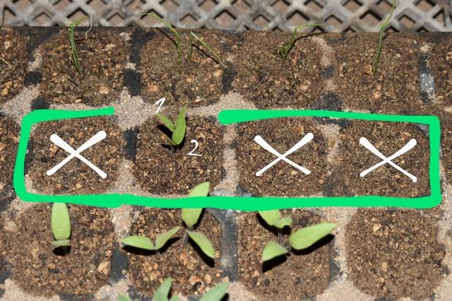 f:id:vegetablist:20200423214533j:image