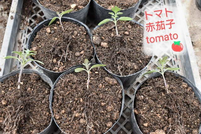 f:id:vegetablist:20200425215937j:image