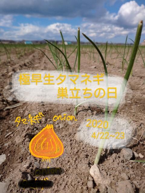 f:id:vegetablist:20200428163204j:image