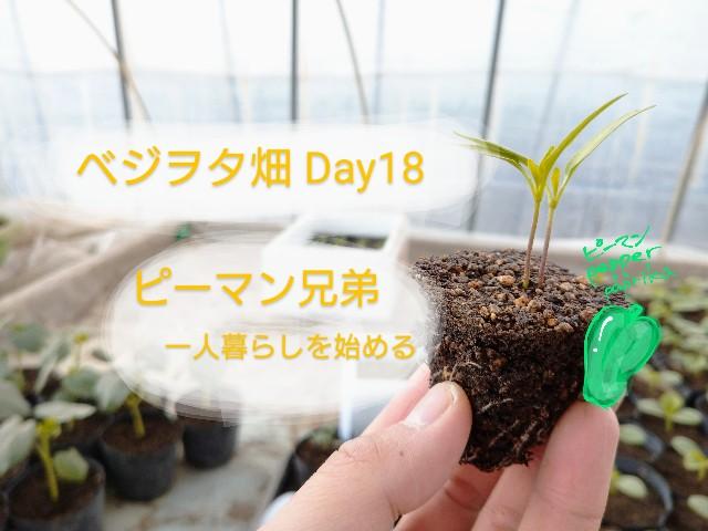 f:id:vegetablist:20200429164832j:image