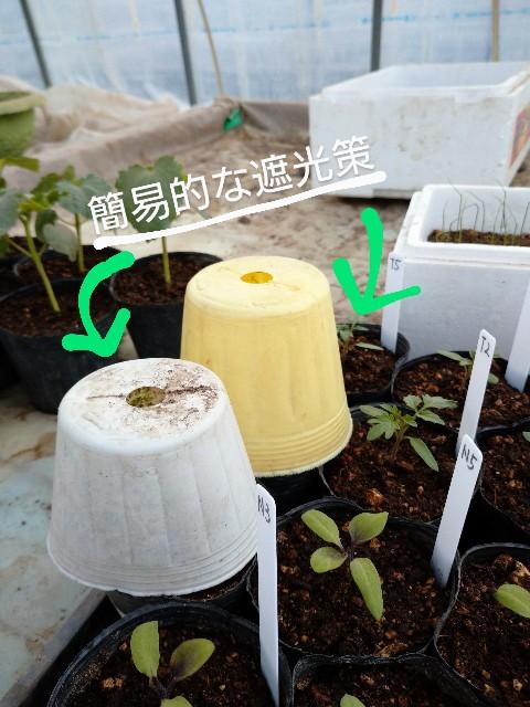 f:id:vegetablist:20200429175504j:image