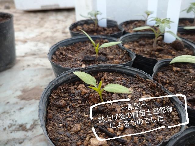 f:id:vegetablist:20200429175953j:image