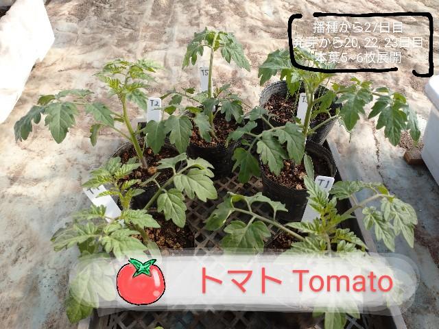 f:id:vegetablist:20200507193916j:image