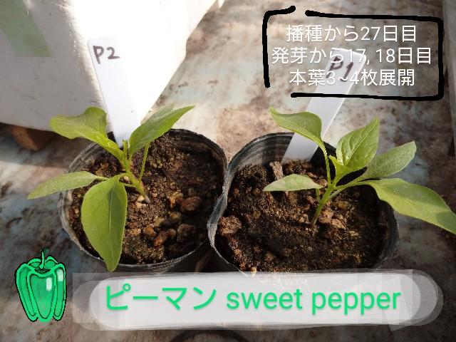 f:id:vegetablist:20200507193949j:image