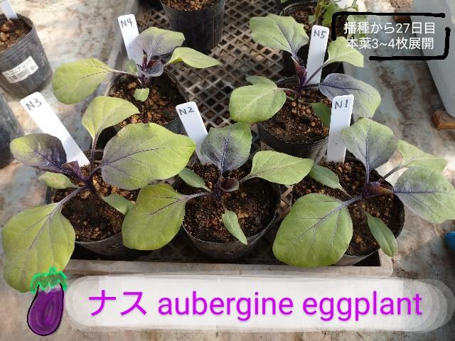 f:id:vegetablist:20200507194038j:image