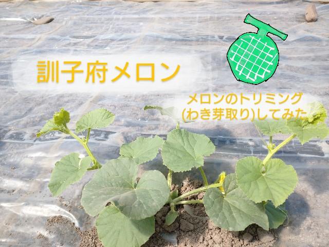 f:id:vegetablist:20200508130951j:image