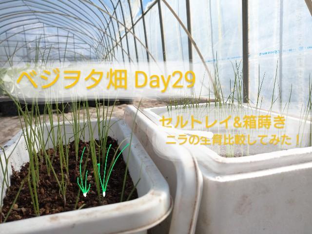 f:id:vegetablist:20200509215600j:image