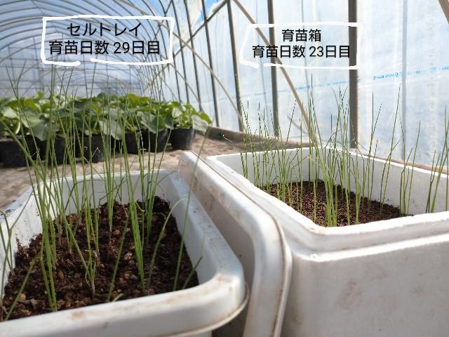 f:id:vegetablist:20200509220223j:image