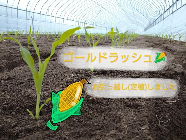 f:id:vegetablist:20200510183946j:image