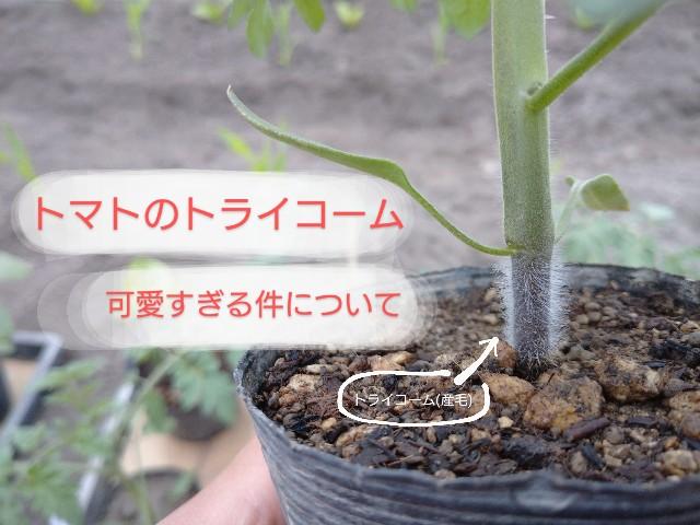 f:id:vegetablist:20200511162652j:image