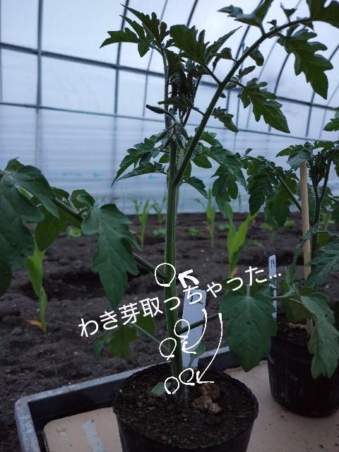 f:id:vegetablist:20200513185910j:image
