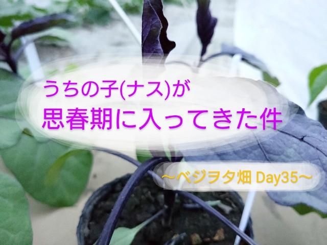 f:id:vegetablist:20200515182025j:image