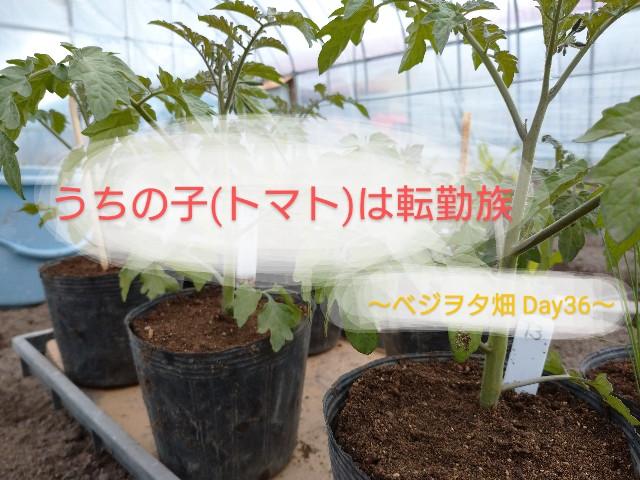 f:id:vegetablist:20200516154641j:image