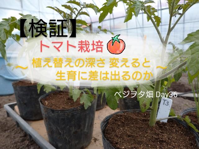f:id:vegetablist:20200517112817j:image