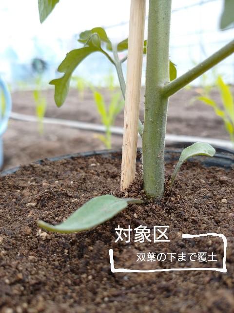 f:id:vegetablist:20200517173317j:image