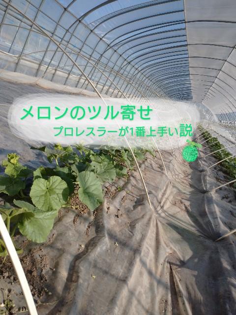 f:id:vegetablist:20200517173602j:image