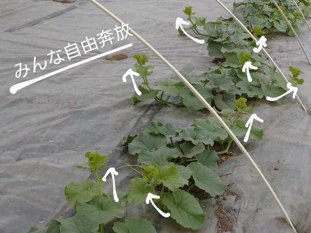 f:id:vegetablist:20200517174453j:image