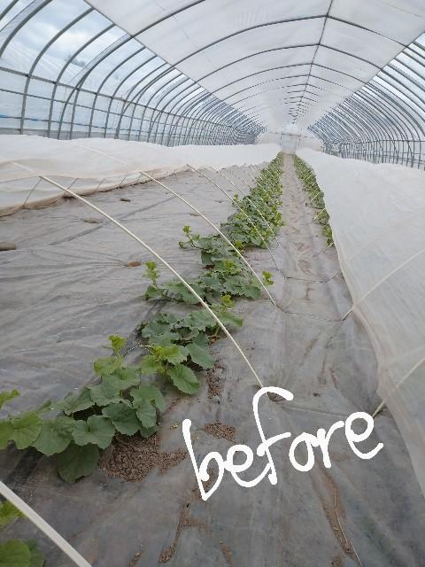 f:id:vegetablist:20200517204914j:image