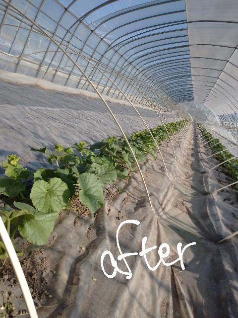 f:id:vegetablist:20200517204936j:image