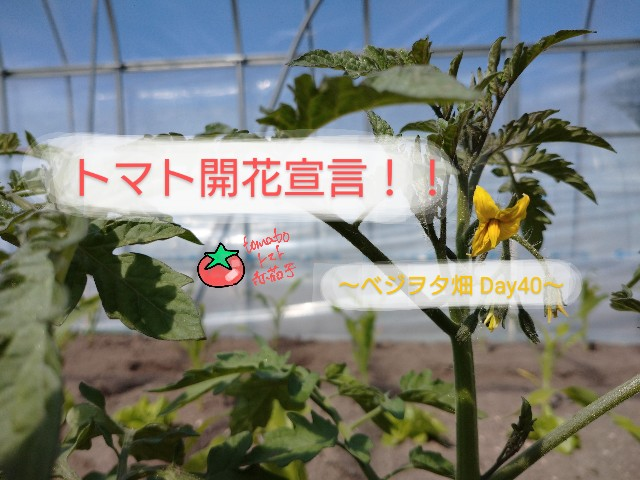 f:id:vegetablist:20200523193602j:image
